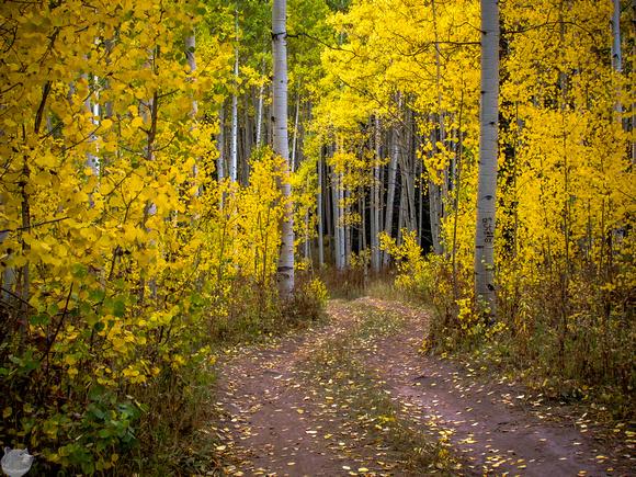 Colorado Fall Colors 14